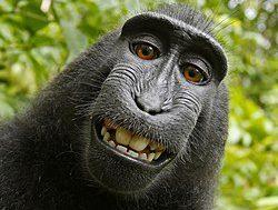 القرد في عين أمه غزال!